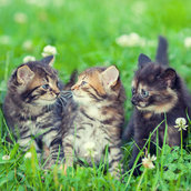 Three little kittens wallpaper