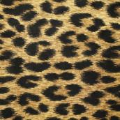 Leopard [LG Home+]